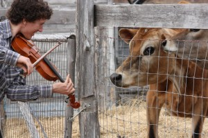 Benoit and Sunflower, our music loving cow