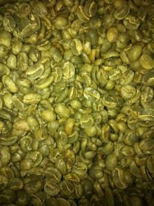 Green, unroasted, fair trade coffee beans